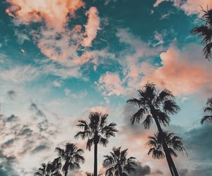 ceu, nature, and palm trees image