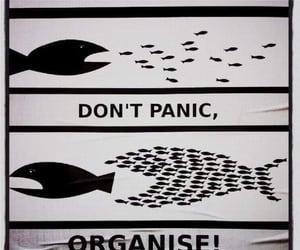fish, organisation, and panic image