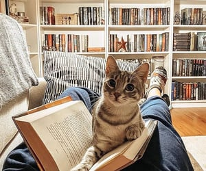 animals, book, and books image