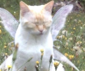 aesthetic, cat, and fairy image