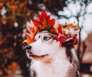 🐾, 🐶, and 🍁 image