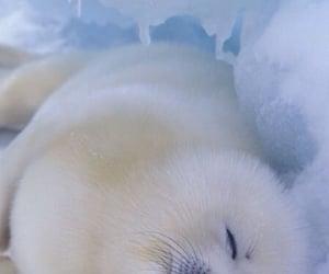 animal, seal, and baby image