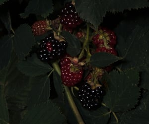 blackberry and fruit image