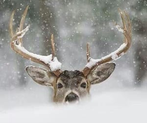 animals, holiday, and nature image