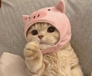 animal, hat, and kitten image