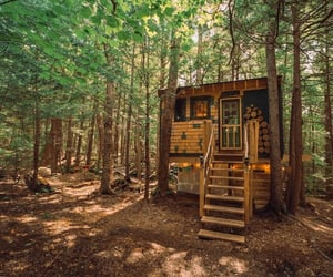 house, nature, and treehouse image
