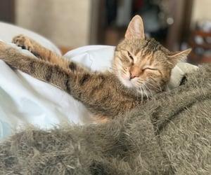 kitty, precious, and kadrie image