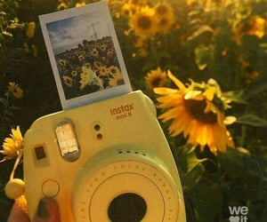 aesthetic, sun flower, and yellow image