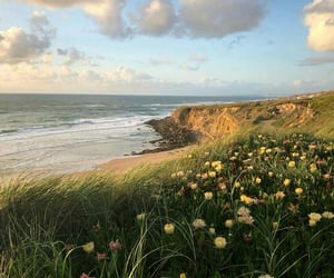 flowers, nature, and beach image