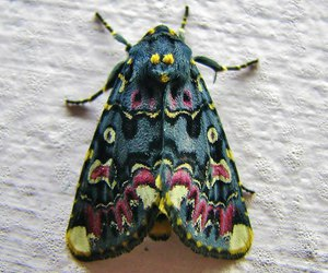 beautiful, moth, and butterfly image