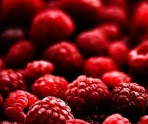 berries, background, and wallpaper image