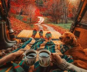 autumn, dog, and fall image