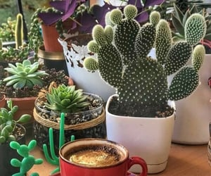 cactus, coffee, and dishes image