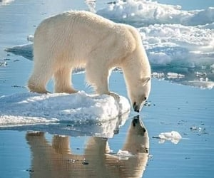 animals, cold, and nature image