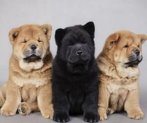 animals, chiens, and pets image
