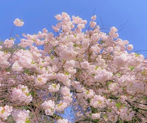 beautiful and pink image