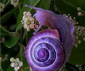 Animales, caracol, and naturaleza image