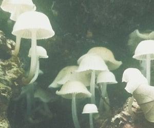 mushroom, aesthetic, and grunge image