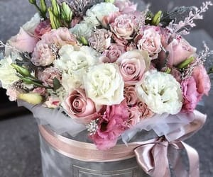 flower, pink and white, and presents image