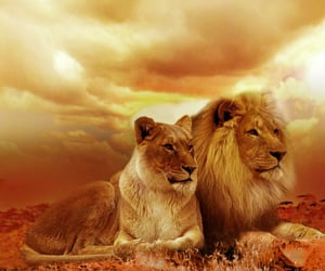 care, king, and lion image