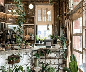 background, plants, and shop image