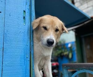 adorable, dog, and pets image