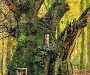 fantasy, treehouse, and forest image