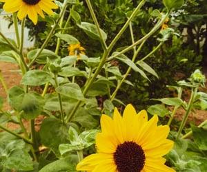 flower, yellow, and blümen image