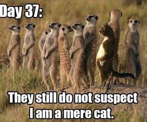 humor and humour image