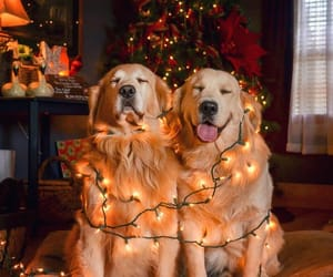 christmas, cute, and dogs image