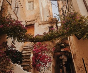 ancestry, flowers, and Houses image