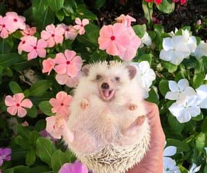animal, enjoy, and flowers image