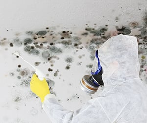 mold remediation near me, mold wood remediation, and mold removal near me image