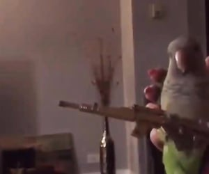 funny video, pets, and lol image