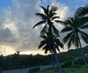palmtrees, Caribbean, and paradise image