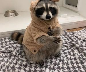 animal, grey, and cute image