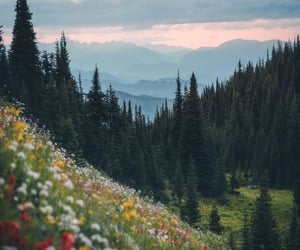 flowers, forest, and landscape image