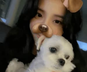 dog, kpop, and jisoo image