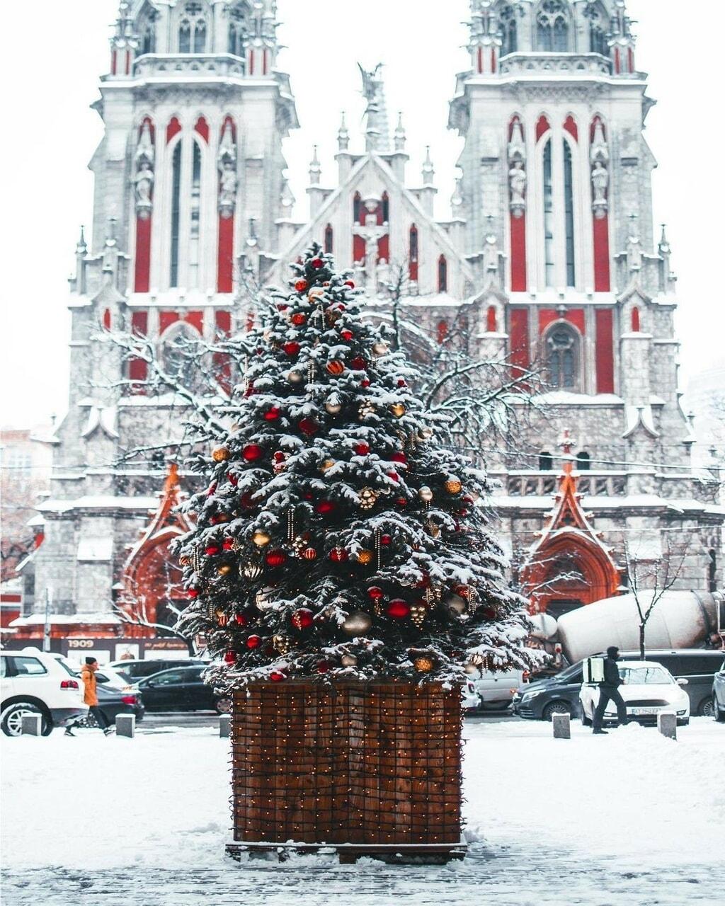 christmas, christmas tree, and kyiv image