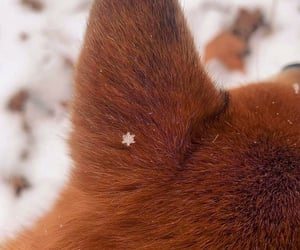 animal, snow, and snowflakes image