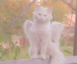 cat, angel, and aesthetic image