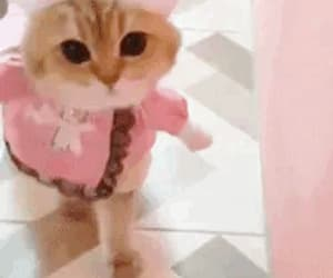 cat, pink, and gif image