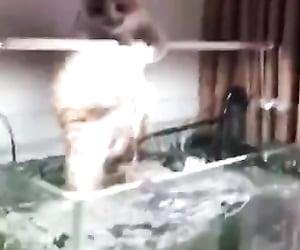 aquarium, lol, and funny video image