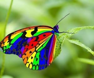 multicolor image