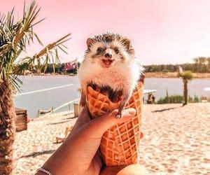 adventure, animal, and hedgehog image