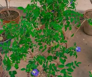 flowers, gardening, and purple flowers image