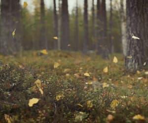 autumn, fall, and gif image