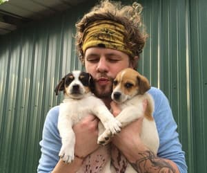 dogs, jay mcguiness, and james mcguiness image
