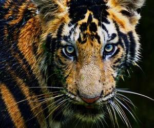 animals, cat, and feline image