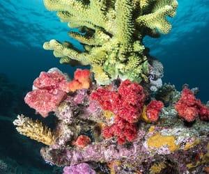 reef image